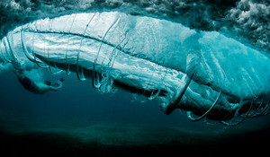 The Intricacies of Water – Ray Collins
